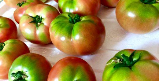 豊岡 なかすじ 農業体験